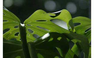 Опасные для здоровья растения, комнатные и не только. Где красота таит опасность?