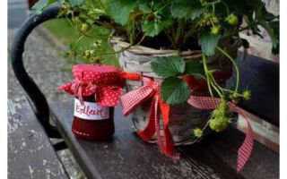 Клубника – кладезь витаминов и минералов