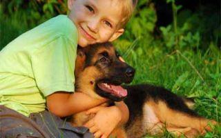 Домашний питомец для ребенка, или влияние домашних животных на развитие детей