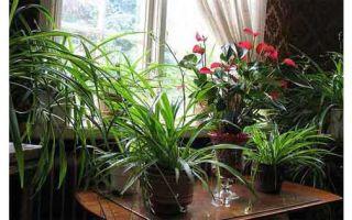 Полезные растения для дома