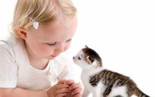 Какого домашнего питомца завести для ребенка?