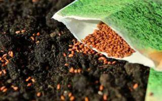 Семена с ГОСТом
