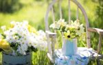 Правила выращивания садовых цветов