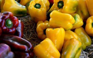 Выращивание перца на грядке