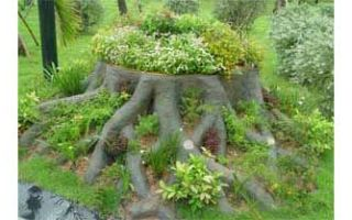 Однолетние растения